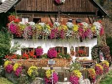fiori in terrazzo ceciefave un balcone perfetto