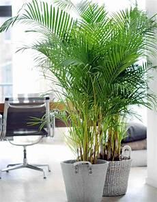 plante d hiver nos 12 plantes pr 233 f 233 r 233 es d 233 coration