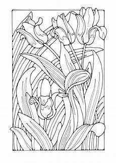 coloring page tulips ausmalbilder malvorlagen