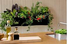 Indoor Garden Containers how to grow an indoor garden cache valley family magazine