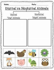nocturnal animals worksheets 13983 239 best science activities images on teaching science science and science activities