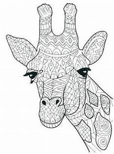 Ausmalbilder Erwachsene Giraffe Ausmalbild Giraffe Zum Ausmalen Ausmalbilder