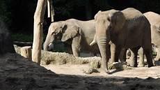 Zootiere Malvorlagen Quotes 37 Afrika Bilder Kostenlos Ausdrucken Besten Bilder