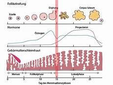 wann ist der eisprung menstruation periode regel netdoktor at