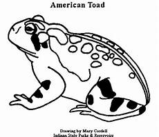 animal coloring pages for free 17293 dnr coloring pages animals