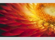 sunshine wallpaper petals   HD Desktop Wallpapers   4k HD