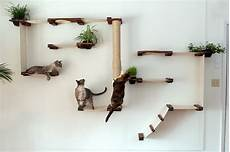cat mod gardens complex catastrophic creations