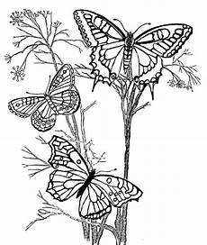Ausmalbilder Schmetterling Blume Pin Auf Candanar
