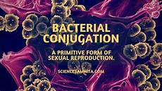 bacterial conjugation primitive form of sexual reproduction