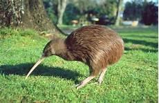 Gambar Hewan Aves Dan Penjelasannya Jasa Pengetikan Cibinong