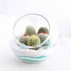 minigarten mit kakteen im glas kakteen in 2019 mini