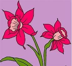 dibujos de la orquidea el araguaney y el turpial para colorear orquidea dibujoi imagui