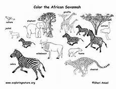 Malvorlagen Afrikanische Tiere Savanna Animals Coloring Page Exploring Nature