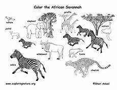 Ausmalbilder Tiere Afrika Savanna Animals Coloring Page Exploring Nature