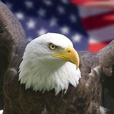 bald eagle iphone wallpaper 壁紙 アメリカン イーグル タブレット壁紙ギャラリー