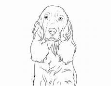 Ausmalbilder Hunde Cocker Spaniel Kostenlose Malvorlage Hunde Englischer Cocker Spaniel Zum