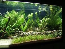 Klappt Das So Mit Der Terasse Aquarium Forum