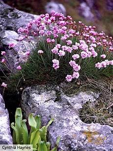 304 Best Rock Gardens Ground Covers Images On