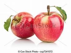 Malvorlage Apfel Mit Blatt Gr 252 Ner Apfel Mit Blatt Gr 252 Ne Apfelfr 252 Chte Mit Isolierten