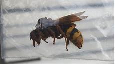 Aurore Nous Montre Cet Insecte Trouv 233 224 Dour Quot C Est Peut