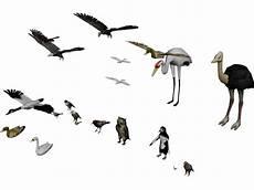 how to make a 3d bird model birds collection 3d model 3d cad browser