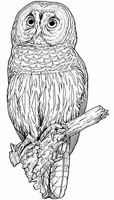 Malvorlage Eule Bunt Eule Malvorlage Bunt Einzigartig Eulen Eulen Owl Animal