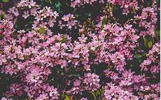 Flower Wallpaper Macbook Air by Nv68 Flower Pink Happy Nature Wallpaper