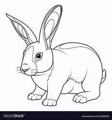 Ausmalbilder Hasen Drucken Rabbit Coloring Page Royalty Free Vector Image