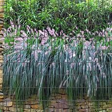 Graswand Bedruckter Sichtschutz Streifen Individueller