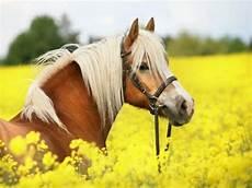 mehr als 70 sch 246 ne pferde bilder archzine net