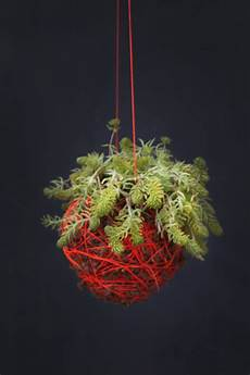 indooroutdoor hanging moss balls filled with plants indoor outdoor hanging moss balls filled with plants