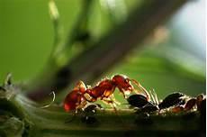 Pflanzenforschung De Klein Aber Oho Ameisen Helfen Bei