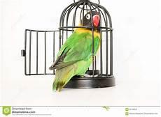pappagallo in gabbia la fuga pappagallo in una gabbia con una porta aperta