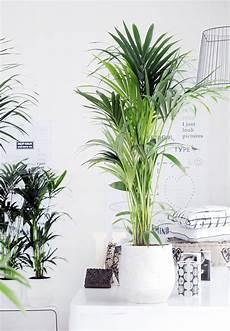 schlafzimmer pflanzen gesund die richtige zimmerpflanze f 252 r das schlafzimmer house