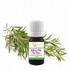 l huile d arbre à thé huile essentielle bio hect arbre 224 th 233 tea tree