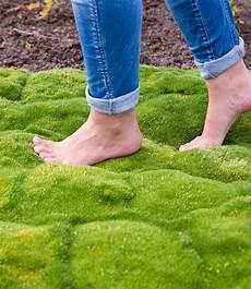Moos Kollektion Top Pflanzen Kaufen Baldur Garten