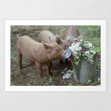 pigs accents bringing charming country home themes humor modern interior decorating edible pig decor print by post road vintage pigs