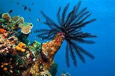 Malvorlagen Unterwasserwelt Berlin Faszinierende Unterwasserwelt Curacao Radio Paradiso Berlin