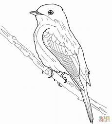 animado turpial dibujo dibujo de mosquero fib 237 para colorear dibujos para colorear imprimir gratis