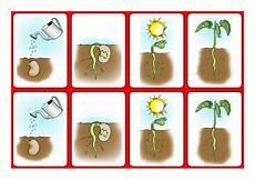 plants sequencing worksheets 13629 science sequencing growing a bean with symbols by benpartridge teaching resources tes