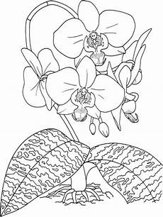 Window Color Malvorlagen Orchideen Orchid Coloring Pages And Print Orchid Coloring