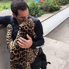 black jaguar white tiger foundation volunteer take