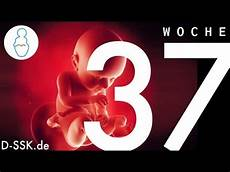 37 Ssw Geburt - 37 ssw 37 schwangerschaftswoche d ssk de