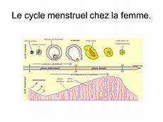 Comment Calculer Cycle Menstruel Pdf