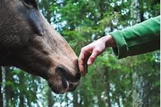 Op Versicherung Pferd - pferde op versicherung der uelzener hier infos und