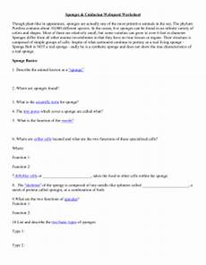 studylib net essys homework help flashcards research papers book report and other