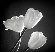fiori in bianco e nero ste artistiche quadri e poster con bianco fiori