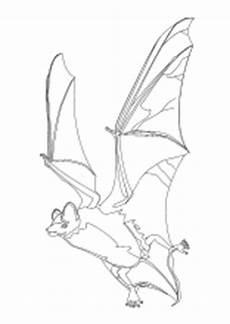 Ausmalbilder Reptilien Malvorlagen Malvorlagen Verschiedene Kleine Tiere Kr 246 Ten Fr 246 Sche