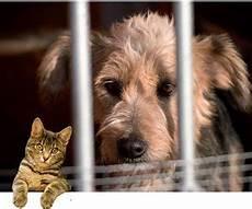 spa arras animaux les refuges de la fondation assistance aux animaux