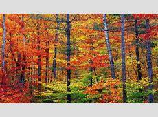 Fall Colors Desktop Wallpapers   Wallpaper Cave